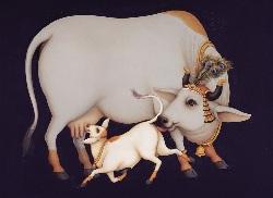 священная корова с теленком